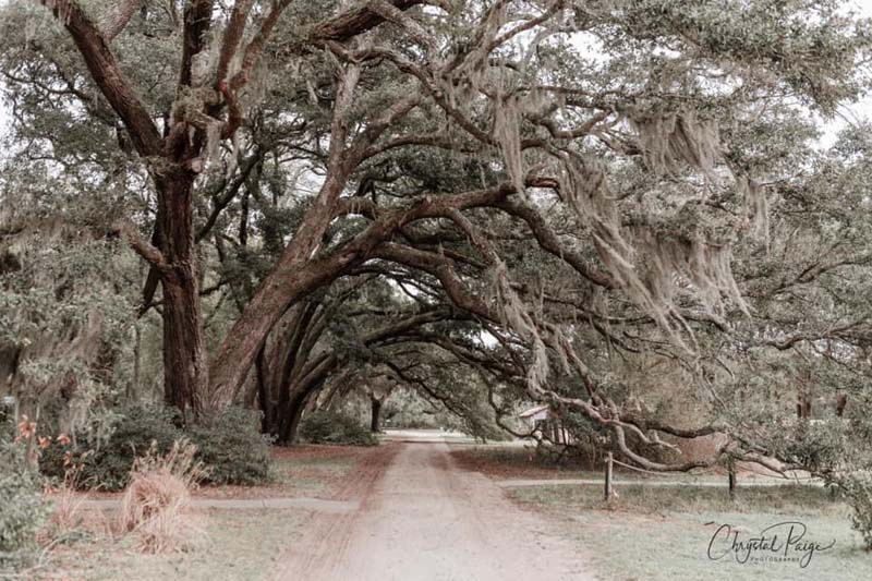 A spotlight on Chrystal Paige Brown with Chrystal Paige Photography in Charleston, SC.