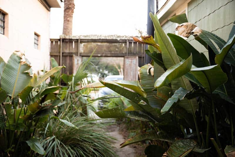 Outdoor plants outside the studio.