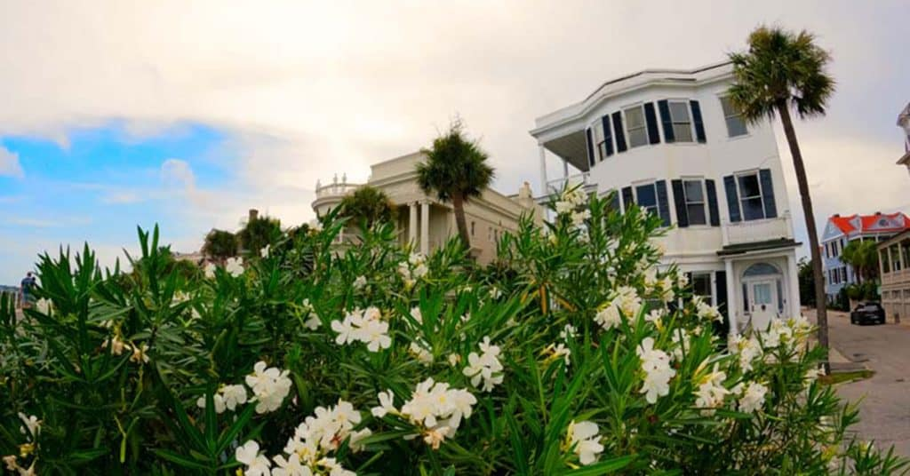 Creative angle on beautiful flowers and downtown estate in Charleston, SC.