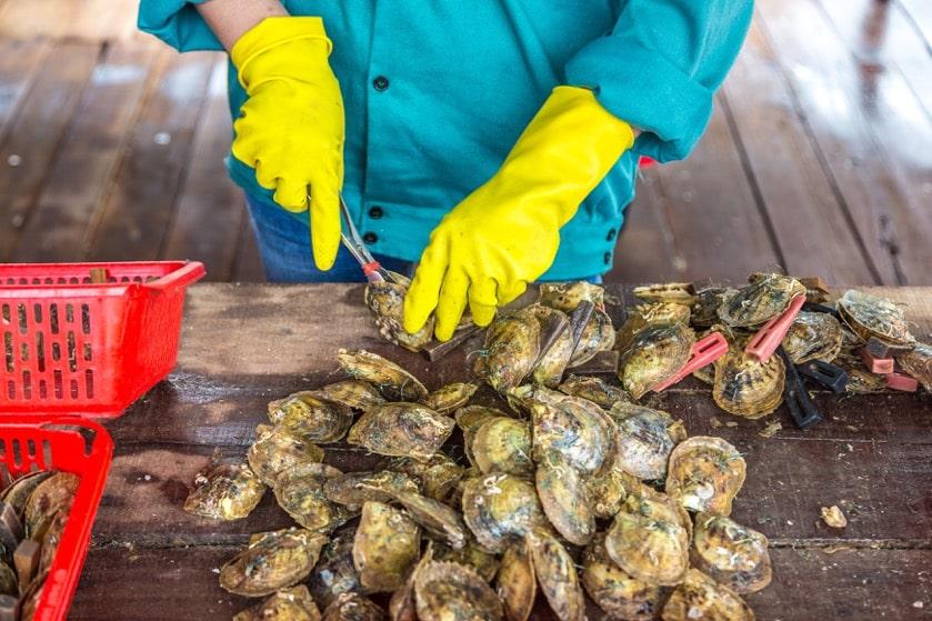 oyster farm charleston