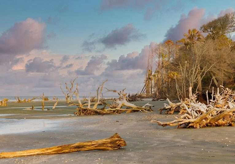 Driftwood on the beach of Capers Island.
